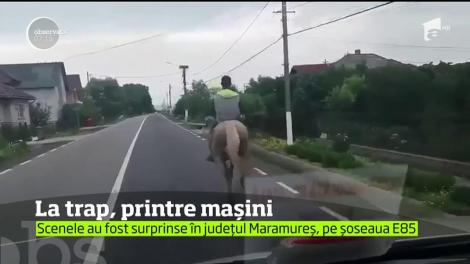 Scene incredibile surprinse în judeţul Maramureş