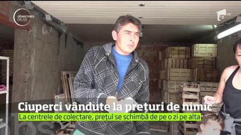 În timp ce străinii dau bani grei pe ciupercile româneşti, culegătorii primesc pe ele preţuri de nimic
