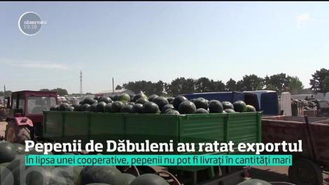 Pepenii de Dăbuleni NU mai ajung în supermarketurile din Suedia. O bună parte dintre ei se vor strica pe câmp şi în acest an