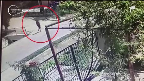 Un cal a băgat un om în spital, în judeţul Constanţa