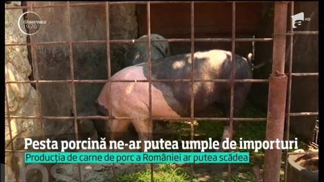 Pesta porcină ar putea umple România de importuri