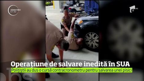 Operaţiune inedită pentru poliţia din Miami. Mai mulţi ofiţeri au fost mobilizaţi pentru a scoate un pui de pisică rămas blocat între componentele unei maşini