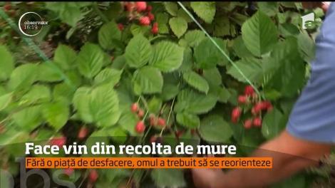 Un agricultor din Craiova face vin din recolta de mure