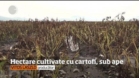 Agricultorii din Harghita sunt disperaţi după ce munca lor, dar şi banii investiţi s-au dus, la propriu pe apa sâmbetei