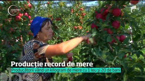 În ciuda vremii extreme, agricultorii se laudă cu cea mai mare recoltă de mere din ultimii ani