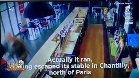 Smiley News! Calul care cere bere la bar