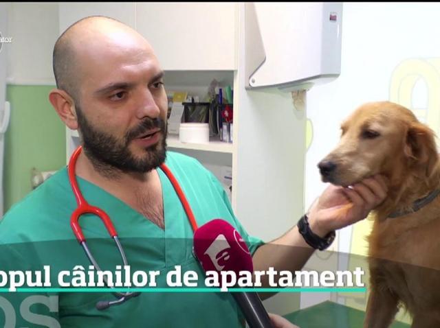 Cele mai potrivite rase de câini pentru apartament, conform specialiştilor