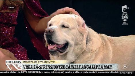"""Elena Marin vrea să-și pensioneze câinele angajat la Ministerul de Interne: """"E foarte cunoscut în Penitenciarul Rahova. Caută telefoane mobile"""""""