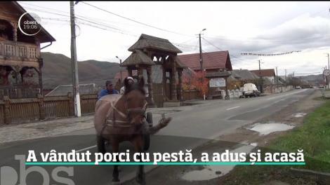 Bărbatul, care a vândut porci bolnavi de pestă în județul Maramureș, este anchetat de poliție
