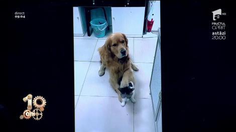 Smiley News! Câinele, cel mai bun prieten al omului, dar și a pisicilor