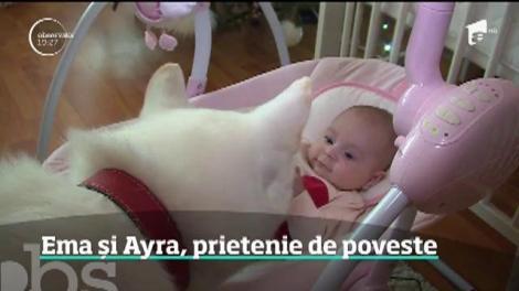 Poveste de film la Târgu Mureş. Un bebeluş de 9 luni şi o căţeluşă din rasa Akita sunt exemplul perfect pentru prietenia specială dintre oameni şi câini