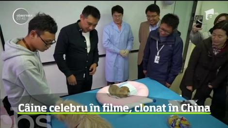O vedetă de film din China a fost clonată, pentru 50.000 de dolari - VIDEO