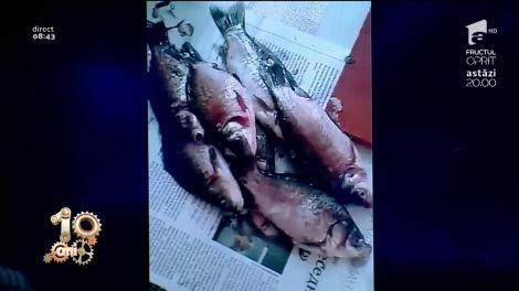 Smiley News. Cum să cureți peștele la bloc fără să faci mizerie