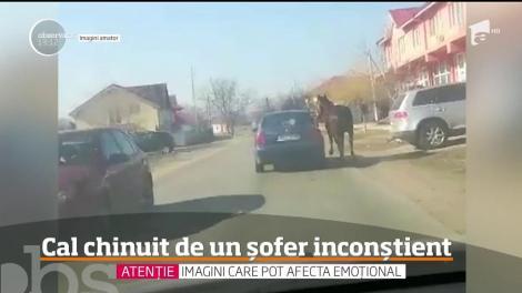 Scene de o cruzime rară au fost surprinse în Dolj! Un bărbat şi-a legat calul de maşină şi l-a târât kilometri întregi