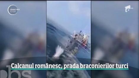Calcanul din apele teritoriale româneşti a devenit o comoară pentru braconierii turci
