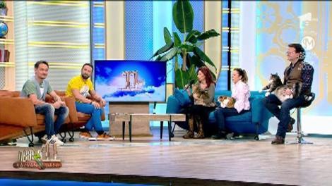 """Pisicile din România au câștigat expoziția competiție din Bulgaria: """"I-am bătut pe bulgari la ei acasă"""""""