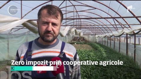 Zero impozit pentru fermierii care vând cel puţin jumătate din recoltă prin cooperative agricole
