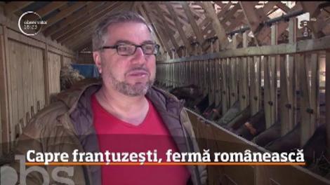 O afacere de familie cu capre franţuzeşti este atracţia copiilor într-o localitate din Dâmboviţa!