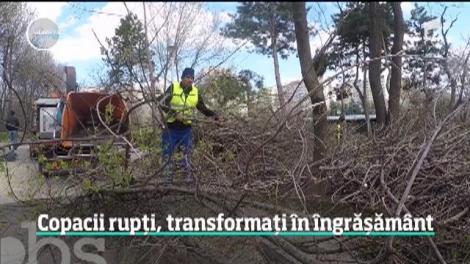 Copacii uscaţi, compost pentru plante. Cum se pot recicla vreascurile