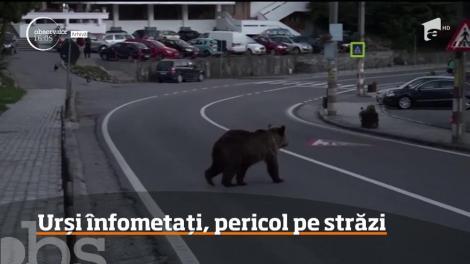 Urșii înfometați, pericol pe străzi. Care sunt zonele pe care oamenii trebuie să le evite