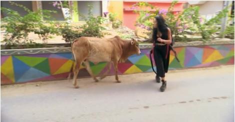 Atenție, vacă! Ruby trece prin momente cumplite după ce-i iese în cale un animal... sfânt. Morodan e în culmea disperării