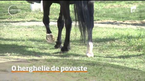 Cea mai mare crescătorie de cai lipiţani din Europa