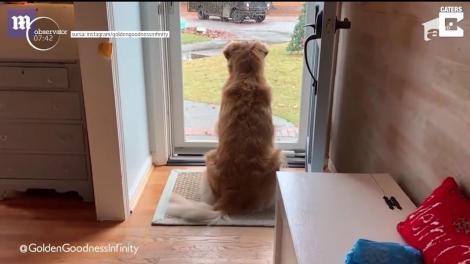Câinele este cel mai bun prieten al poştaşului