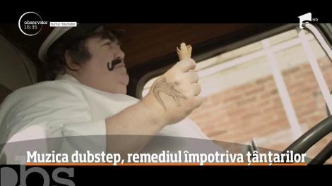 Muzica dubstep, remediul împotriva țânțarilor