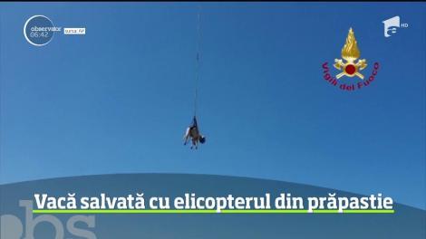 Operaţiune complicată de salvare pe insula italiană Sardinia. Pompierii au intervenit cu un elicopter pentru a salva o vacă, rătăcită pe stâncile de pe malul mării