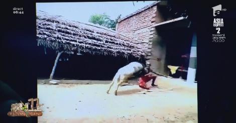 Smiley News. Nea Alecu din India se antrenează cu un berbec. Loviturile îl aruncă la câțiva metri distanță! Video