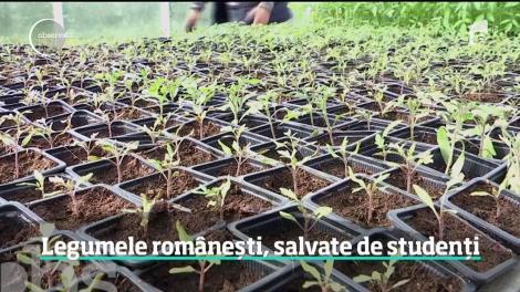 Soiurile de legume româneşti sunt ţinute în viaţă  la Universitatea de Ştiinţe Agricole şi Medicină Veterinară din Cluj