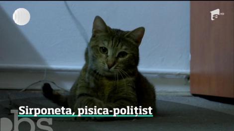 Exista si pisici-politist! Sirponeta este mândria Politiei Capitalei