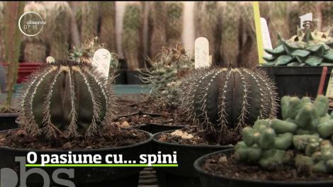 O pasiune adevărată necesită răbdare, înţelegere şi, uneori, timp. Iar dacă eşti îndrăgostit de florile de cactus, aşteptarea e lungă
