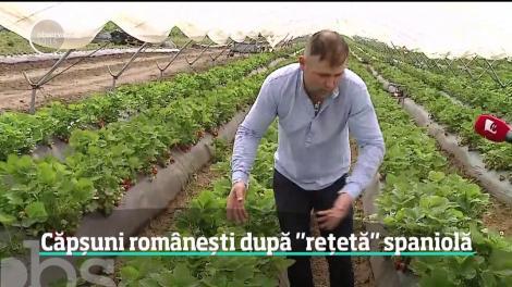 Căpșuni românești după rețetă spaniolă. Povestea a doi tineri români care s-au îndrăgostit la o fermă de căpşuni din Spania