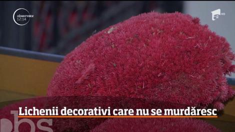 Moda plantelor stabilizate câştigă teren în România. Pereții înverziți, un mediu mai prietenos