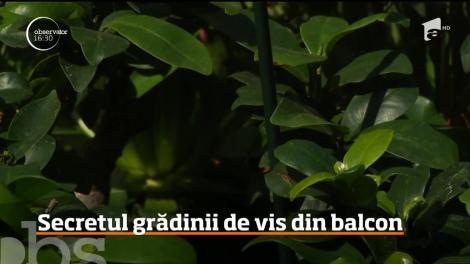 Luna mai este perioada anului în care românii îndrăgostiţi de flori îşi transformă balcoanele în grădini în miniatură!