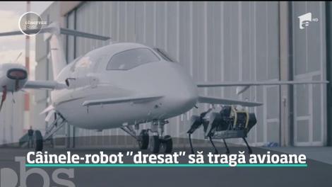 Un robot în formă de patruped a reuşit o performanţă uluitoare. A tras un avion de trei tone pe o distanţă de aproape zece metri
