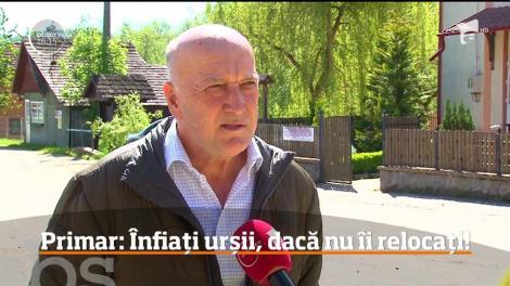 Propunere neobișnuită de la un primar dintr-o comună argeșeană. Preşedintele României şi parlamentarii să adopte câte un urs