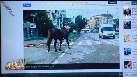 Cal la plimbare prin centrul oraşului Botoșani, timp de două ore!