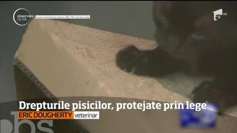 Tăierea ghearelor la pisici ar putea fi interzisă în New York