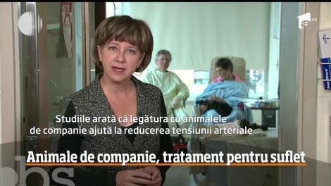 Spital care permite oamenilor să primească vizite din partea animalelor de companie