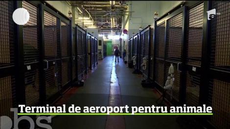 Singurul terminal din lume destinat în exclusivitate animalelor, pe aeroportul John Kennedy din New York