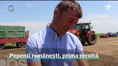 Pepenii românești ajung în piețe mâine! Cum îți dai seama dacă este copt bine