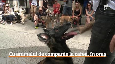 Eveniment dedicat animalelor de companie, într-o cafenea din Târgu-Mureș