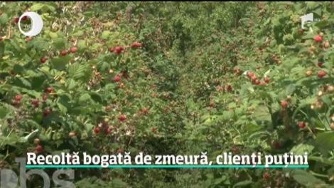 Recoltă bogată de zmeură, dar clienții se lasă așteptați