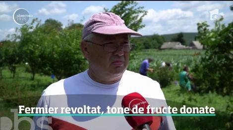Bogăţia din recoltă l-a dus pe culmile disperării. Un fermier din Suceava a refuzat să-şi vândă marfa pe câţiva lei şi a chemat tot satul să culeagă gratis tone de fructe bio