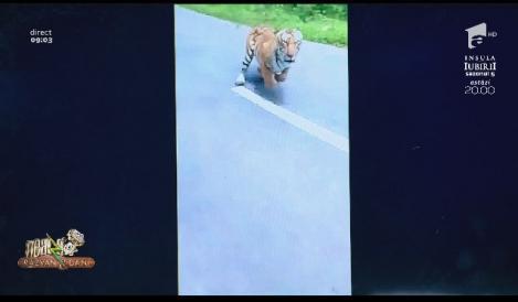 Smiley news - Neatza cu Răzvan și Dani. Motociclist atacat de tigru, în India