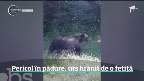 Imaginile inconştienţei lângă Lacul Vidraru din Argeş. O fetiţă hrăneşte un urs din propria palmă