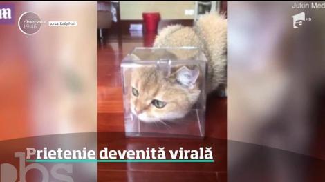 Prietenie devenită virală dintre o pisică și un fluture