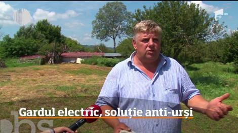 """Urșii înspăimântă oamenii în Argeș! O soluție propusă de prefect iscă mari controverse. """"Se practică în Europa"""" - Video"""